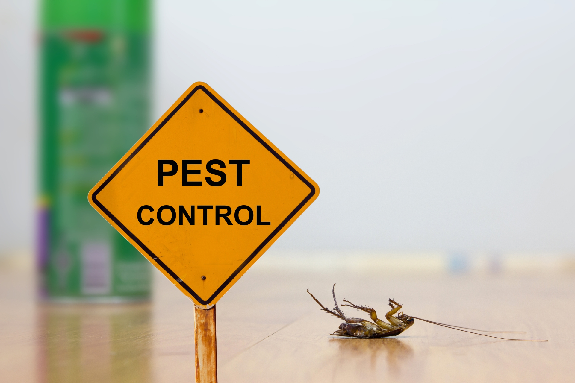 24 Hour Pest Control, Pest Control in Tufnell Park, N19. Call Now 020 8166 9746
